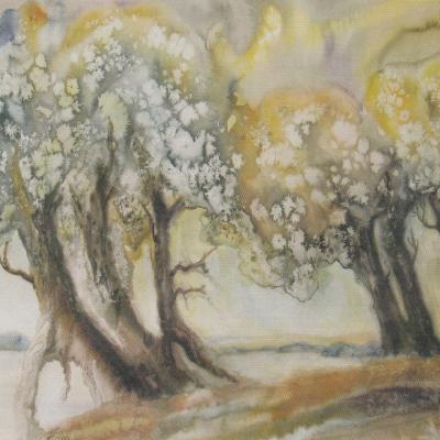 Pakrantės medžiai