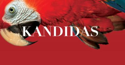 """""""Kandido"""" trikampis: LNOBT kviečia į premjeros pristatymo renginius"""